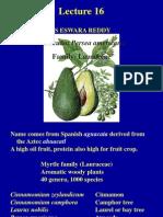 Avocado Production