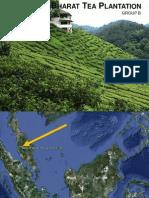 Bharat Tea Plantation Site Analysis