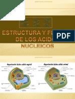 estructuraADN1