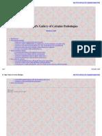 Dr.Vogel's Gallery of Calculus Pathologies