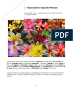 Frangipani – Faszinierende Tropische Pflanzen