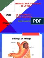 MORFOLOGÍA Y FISIOLOGÍA DEL ESTÓMAGO.