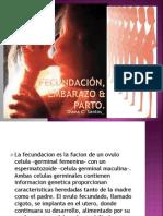 Fecundación, embarazo & parto