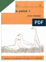 39_cria de Patos