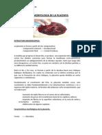 Morfologia de La Placenta Mc