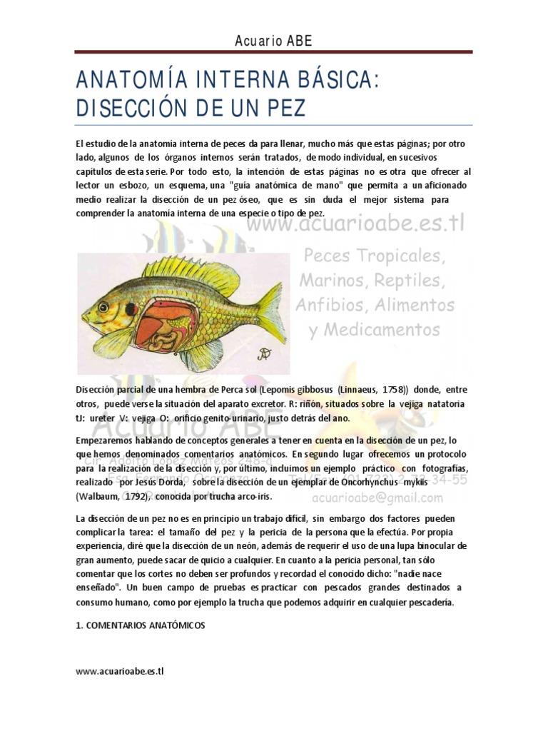 Dorable Peces Anatomía Externa Bandera - Imágenes de Anatomía Humana ...