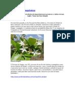 Sergipe e vegetação