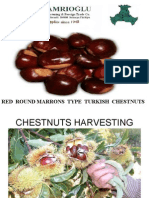 Turkish Marrons Chestnuts - Processing Stages