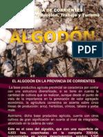 El cultivo del Algodón Situación en la Pcia. de Corrientes