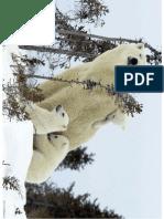 Polar Bear Family Wild Animals1