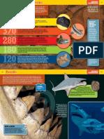 Sharkopedia Excerpt 1