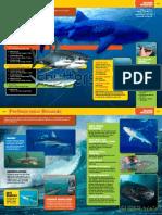Sharkopedia Excerpt 2