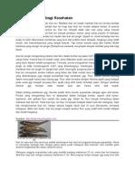 Manfaat Ikan Teri Bagi Kesehatan