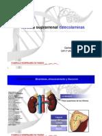 01.- Hormonas Medula Sup