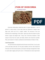 Cultivation of Dioscorea