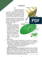 Fotosintesis C3_C4_CAM.pdf