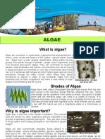 NCCMA-6956 NC Waterwatch Algae Factsheet