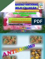 Ppt Antracnosis en Mango