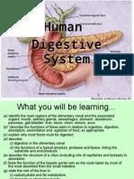 humandigestionteacher-110323090218-phpapp01