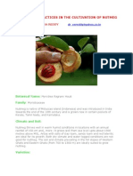 Protitable Practices in the Cultivation of Nutmeg