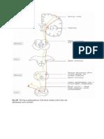Jaras2 Sensorik Dan Motorik