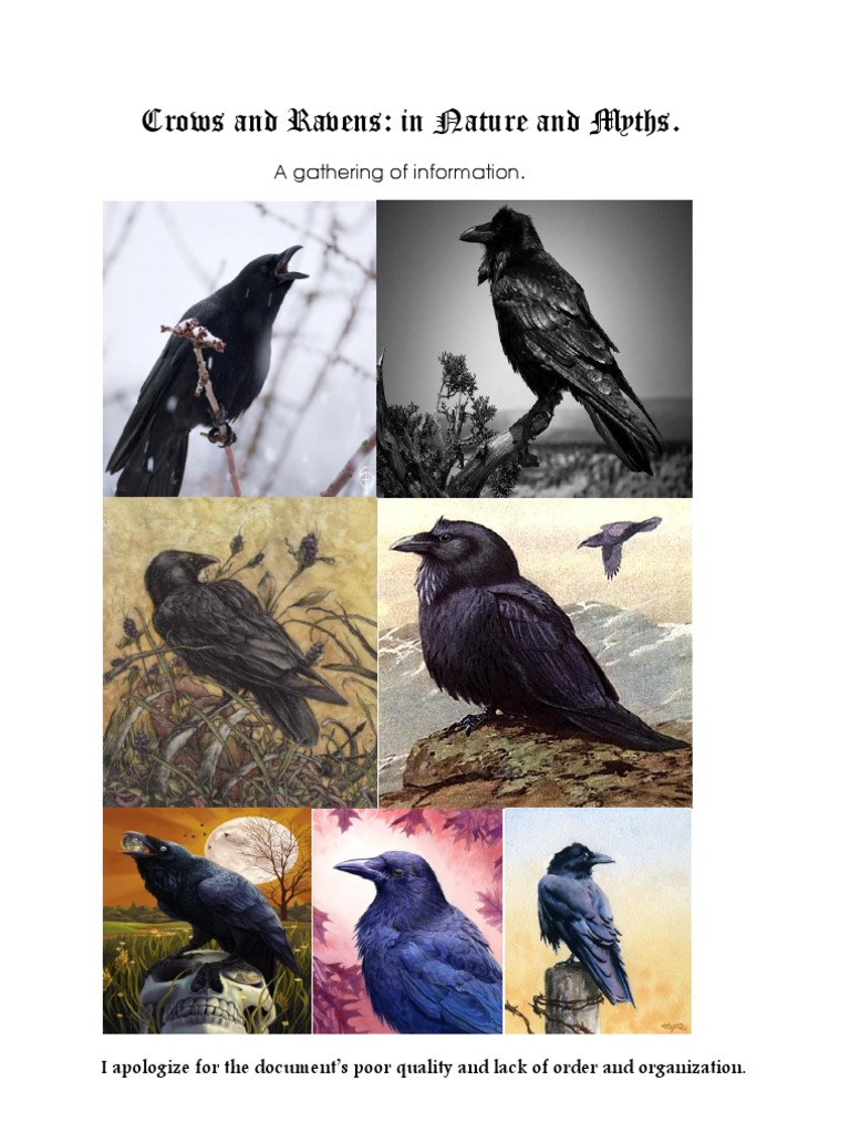 3b6bf060 Crows and Ravens   Mythology   Religion And Belief