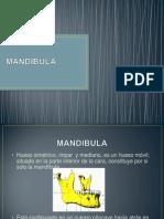 PRESENTACION BIOMECANICA MANDIBULA.ppt