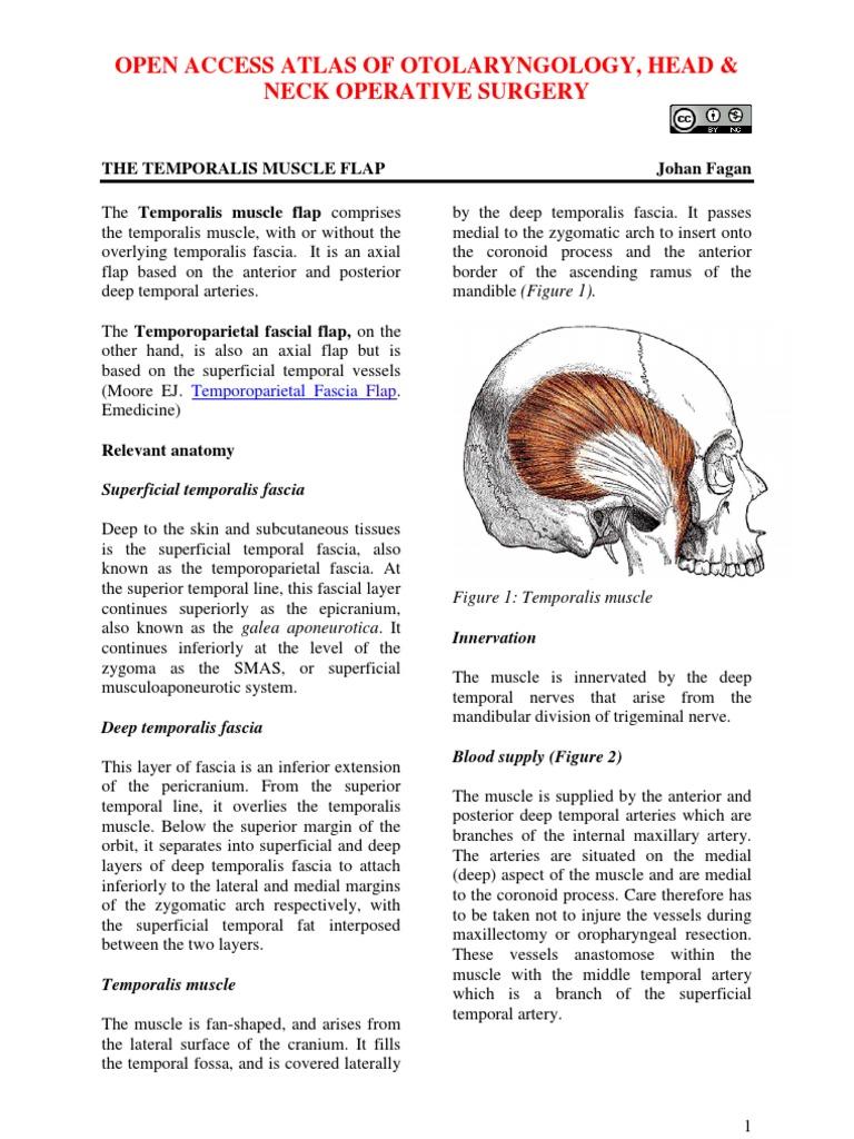 Temporalis Fascia | Human Head And Neck | Human Anatomy