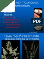 Botanica Taxonomica
