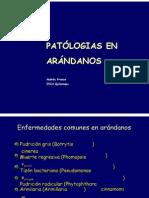 08- Dr[1]. Andrés Frances FINAL9 Arandanos