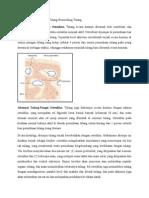 Fisiologi Osteoblas Dan Osteoklas