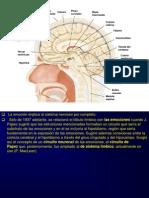 Neurociencias y Oxitocina Presentacion1-100423233802-Phpapp01
