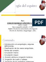 Angiología del equino