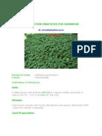 Cultivation Practices for Geranium