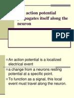 The Action Potential Propagates Itself Along the Neuron