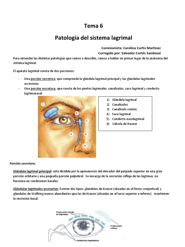6-Lagrimal