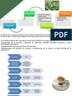 Aguacate, Cafe y Gelato