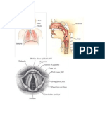 Anatomia y Fisiologia Del Canto