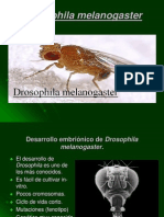 Drosophila Me La No Gaster