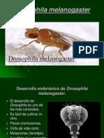 Drosophila Me La No Gaster