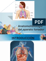 Anatomofisiología del aparato fonador