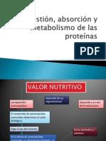 Digestión, absorción y metabolismo proteinas