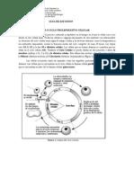 Guía de estudios Ciclo celular