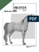 Horse Confurmation
