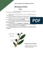 1227787154 Morfologia Da Planta- o Caule