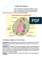 Animal and Plant Cell Anatomy Detailed Notes