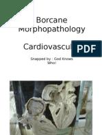 BorcaneCV