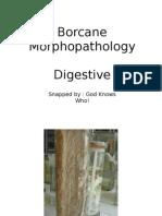 BorcaneDigestive