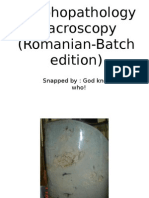 Morphopathology Macroscopy (Romanian-Batch)
