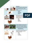 Catalogo de Materia Prima Animal